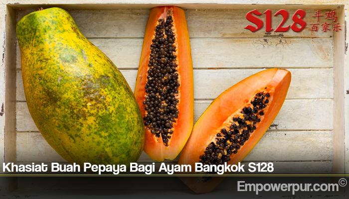 Khasiat Buah Pepaya Bagi Ayam Bangkok S128
