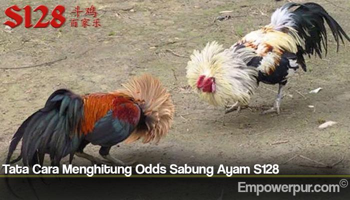 Tata Cara Menghitung Odds Sabung Ayam S128