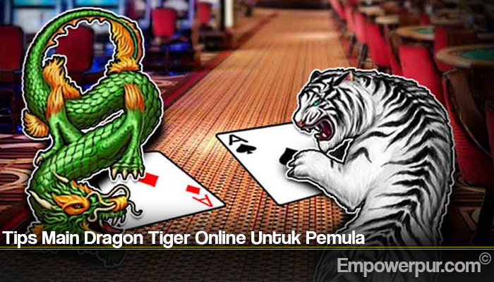 Tips Main Dragon Tiger Online Untuk Pemula